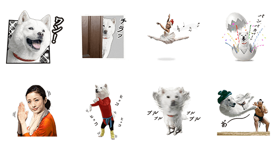 白戸家の画像 p1_2
