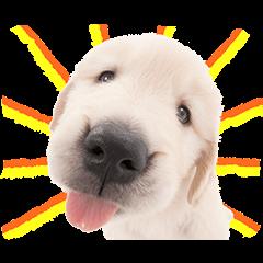 公式スタンプ::THE DOG